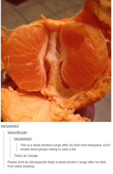 orange drugs tumblr trolling failbook