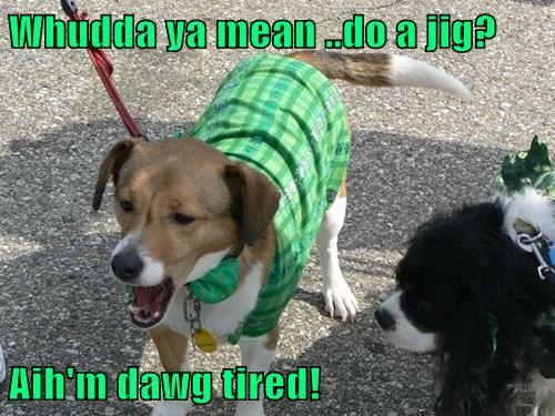 dogs,St Patrick's Day,tired