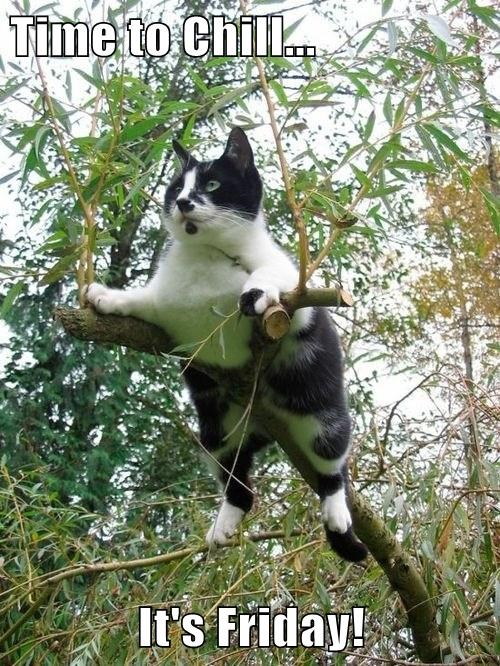Cats,cute,FRIDAY,trees