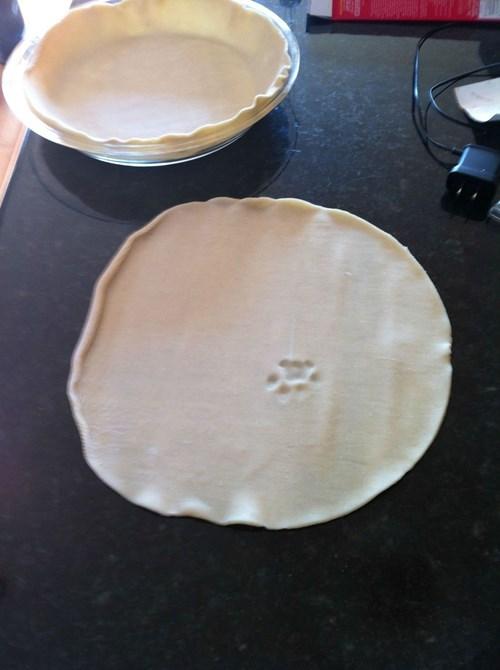 paws puns pie - 8106158848
