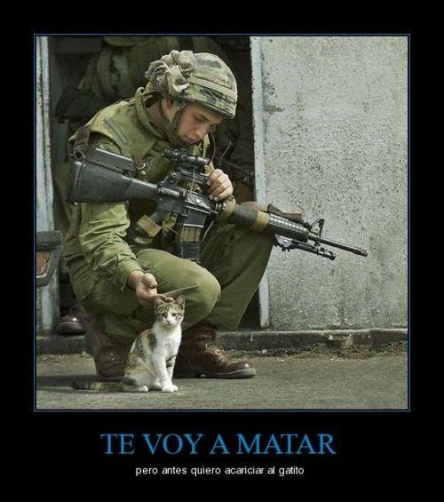 Memes fotos gatos animales - 8106203648