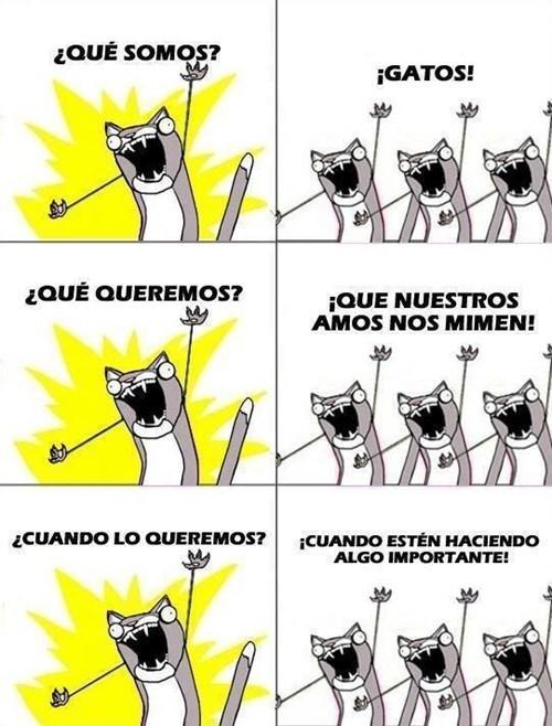 gatos Memes animales - 8106311936
