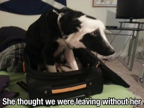 Sad dogs Travel - 8106442752
