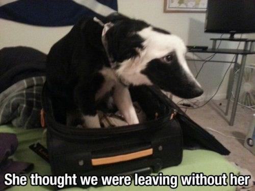 Sad dogs Travel - 8106442752