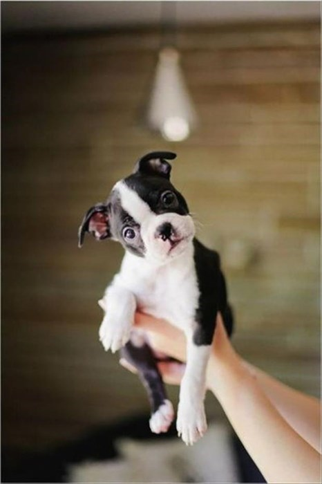 dogs puppies cute flying - 8106530304
