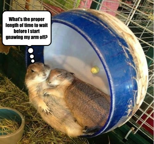 funny,rodents,one night stand