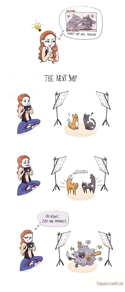 Cats viral videos web comics - 8106569984