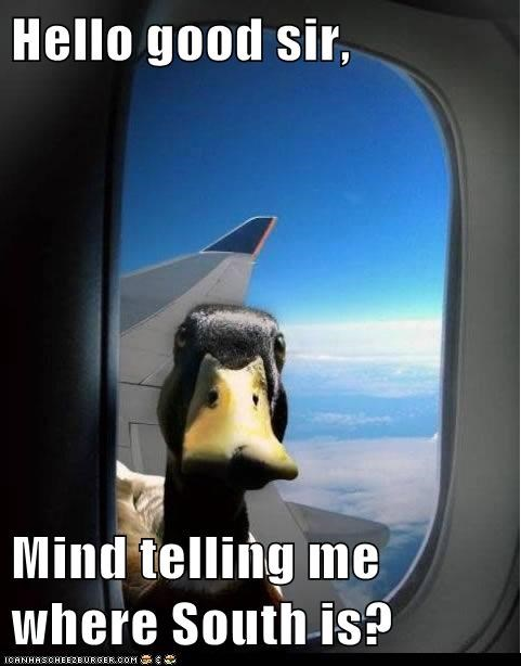crazy,planes,ducks