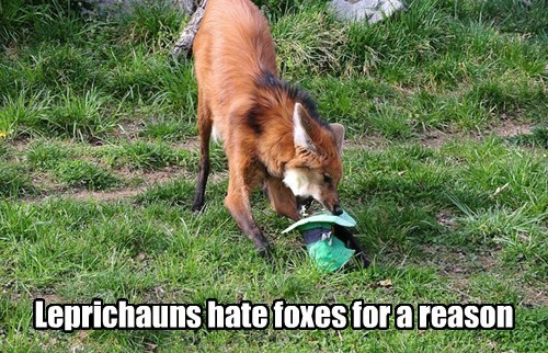 foxes,St Patrick's Day,smart,leprechauns