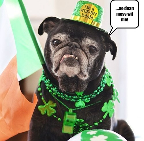 dogs St Patrick's Day irish cute tough - 8107721984