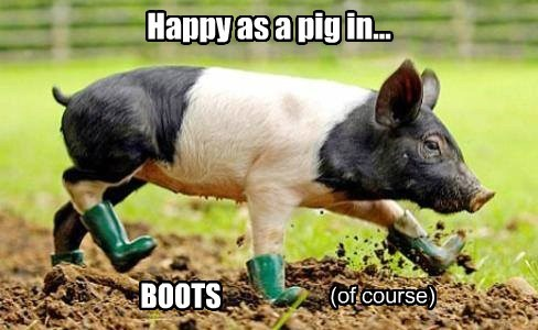 Cheezburger Image 8108526848