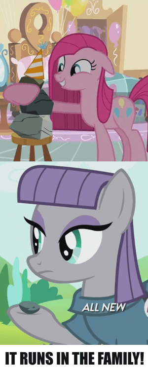 rocks,Genetics,pinkie pie,maud pie