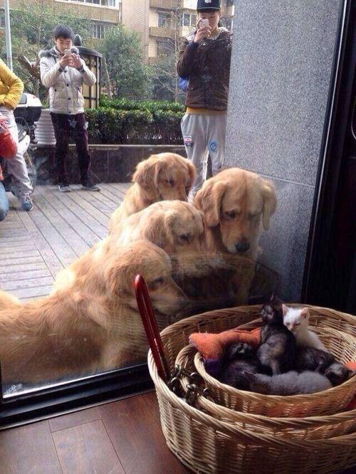 dogs kitten cute love - 8109308672