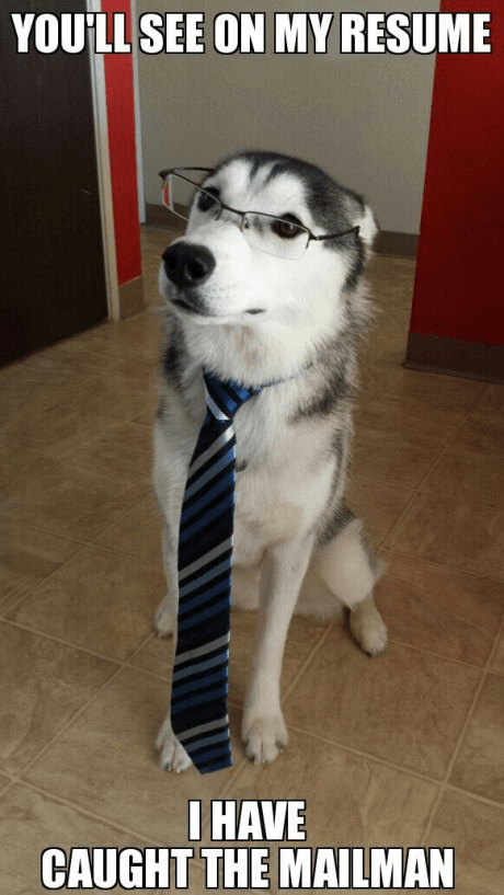 dogs funny resume interview work - 8109317888