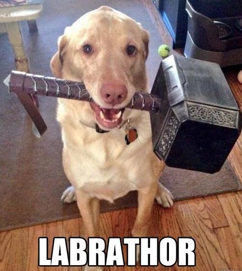 loki dogs Thor marvel thors-hammer - 8109745664