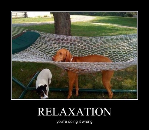 dogs hammock doing it wrong relax