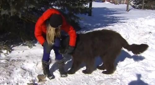 Canada dogs news bears Probably bad News - 8110147584