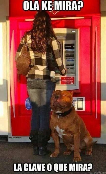 perros Memes animales - 8110180864