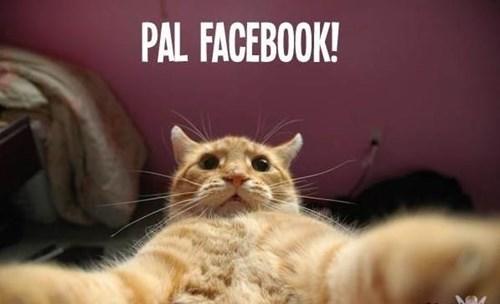 gatos animales medios - 8110187520