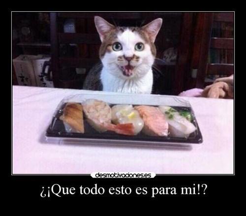 gatos Memes animales - 8110210048
