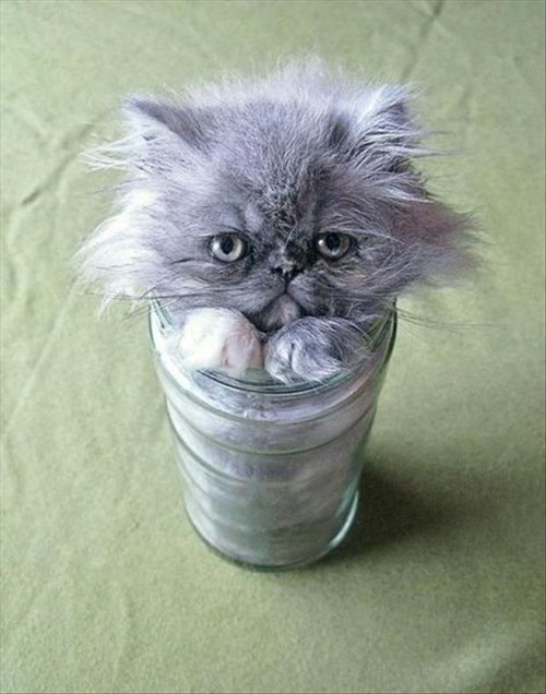 kitten,cute,jars,Cats