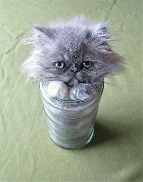 kitten cute jars Cats - 8110316288