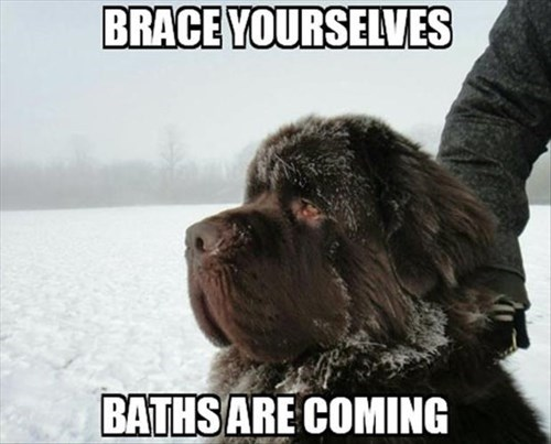 dogs baths doom funny - 8110321664