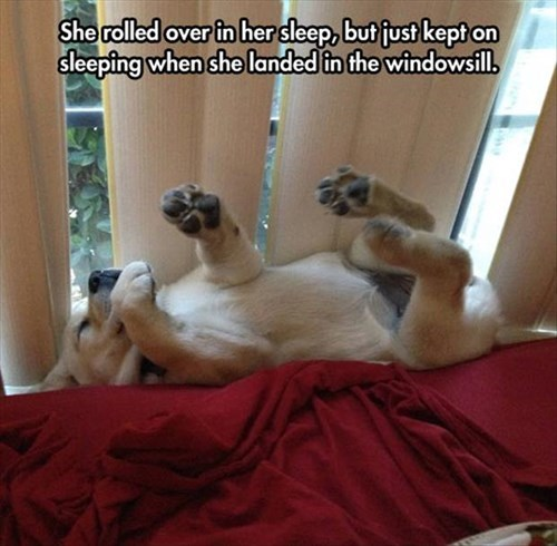 dogs windows cute sleeping - 8110330880