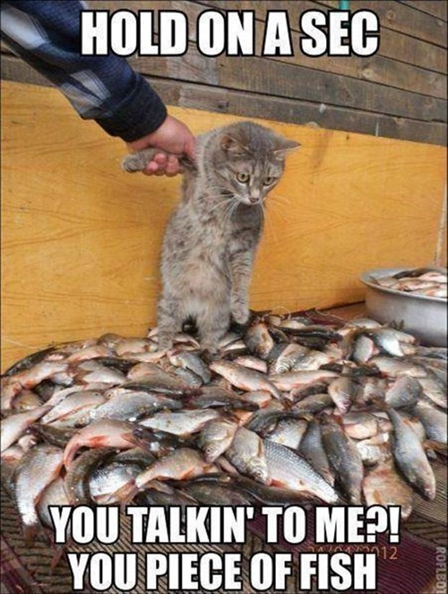 fight fish Cats funny - 8110361600