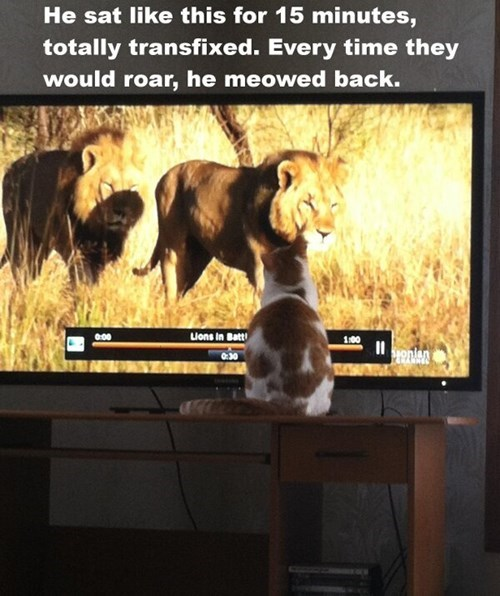 lions cute related Cats - 8110377216