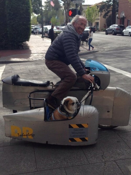 dogs cute bulldogs side car bikes motorcycle - 8110382080