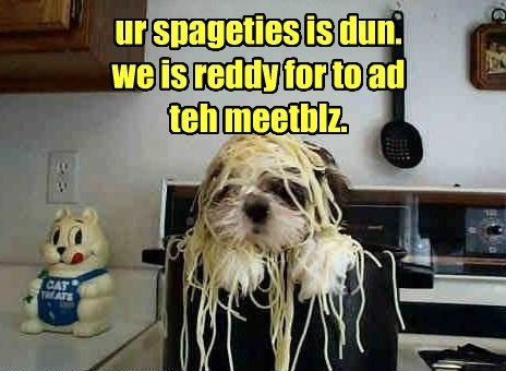 dogs meatballs spaghetti - 8110491648
