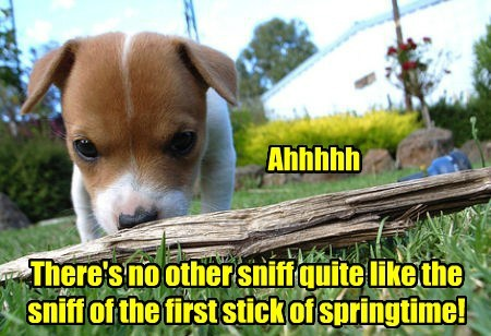 dogs,fetch,spring,sticks