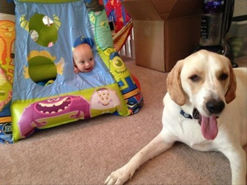 dogs baby cute parenting - 8110508800