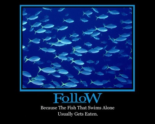 good idea,following,fish,funny