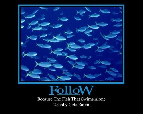 good idea following fish funny - 8110534912