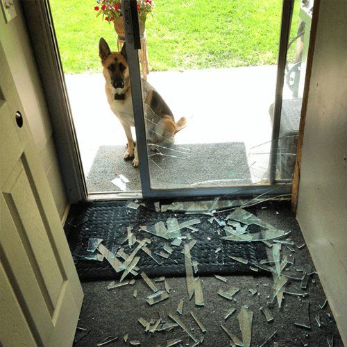 dogs whoops windows crash