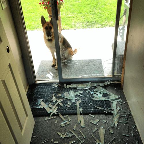 whoops windows crash - 8110546688