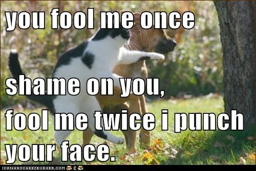 dogs fool me once Cats - 8110578432