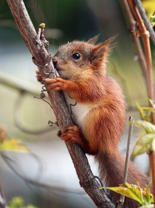 Babies climb cute squirrels - 8110639360