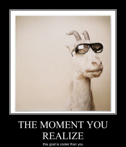 cooler than you goats funny - 8110706688