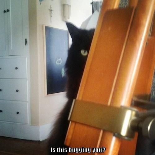 creepy spy Cats funny - 8110878976