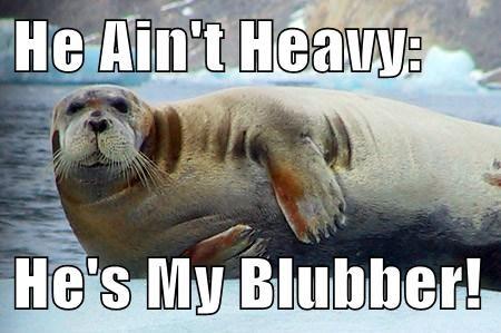 Music seals blubber puns - 8110935552
