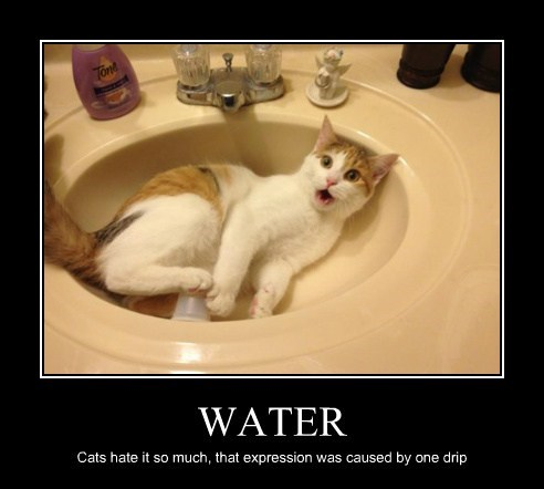 water cute sink Cats funny
