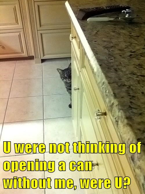 can opener Cats funny - 8111167488