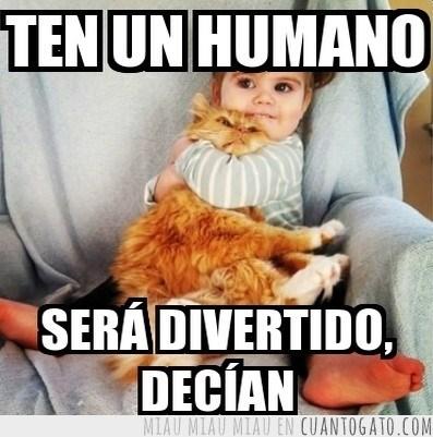 gatos Memes animales - 8111397376