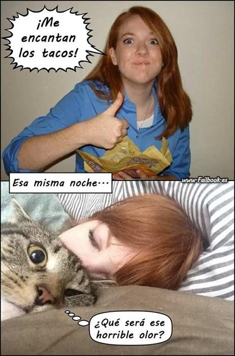 gatos bromas viñetas Memes animales - 8111412736