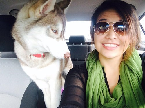 dogs selfie huskies Photo - 8111423744