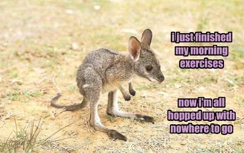 puns cute kangaroos - 8111509248