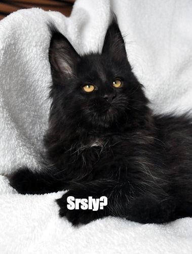 adopt,awesome,Cats,black cats,gifs,rescue,list,love,users,ani.s4,sylviag,Booboo22